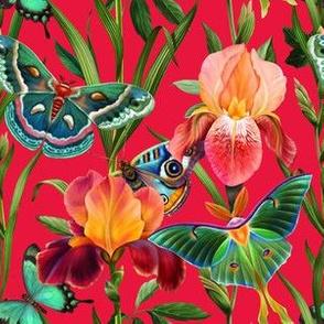 Butterflies in the iris garden