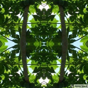 Green tree kaleidoscope star