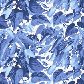 t-begonia_blue
