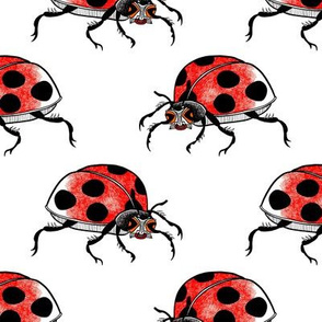 Funky ladybug