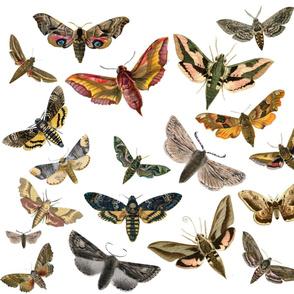 Flying Moths