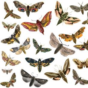 Flying Moths 2