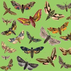 Army Green Flying Moths
