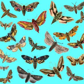 Blue Flying Moths