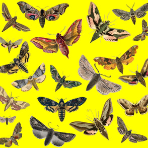 Bright Yellow Flying Moths