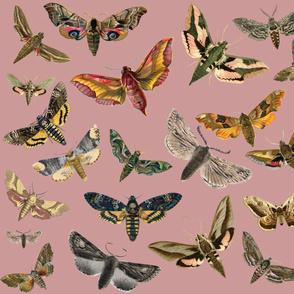 Dark Lavender Flying Moths