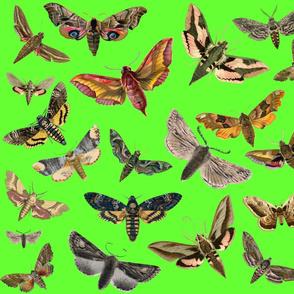 Lime Green Flying Moths