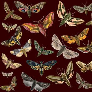 Maroon FLying Moths