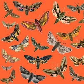 Orange Flying Moths