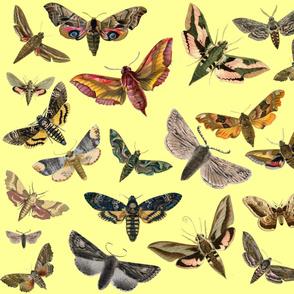 Yellow Flying Moths