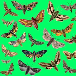Turquoise Green Flying Moths