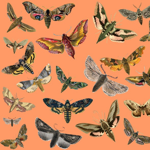 Peach Flying Moths