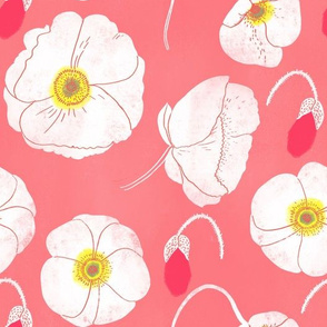 poppies on warm pink