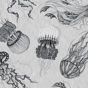 jellyfish light grey