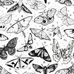 Moth Magic on White