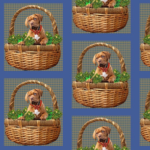 Mastiff in Basket Frame
