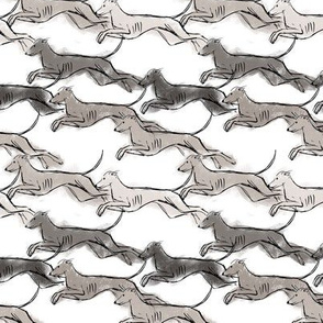 Running Greyhounds