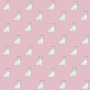 Ragdoll cats on dusty pink