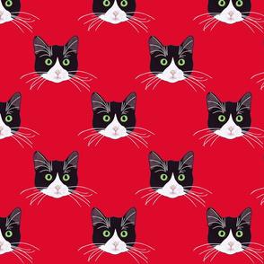 BLACK&WHITE CAT RED