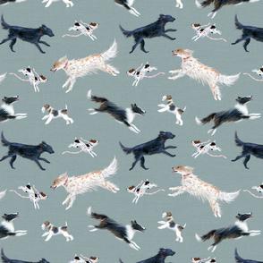 run dog run blue grey