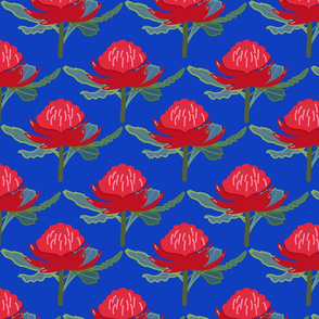 Australian Waratah Magic Garden - cobalt blue, medium