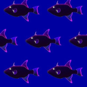 Ocean Triggerfish Deep colors
