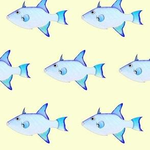 Ocean Triggerfish on yellow