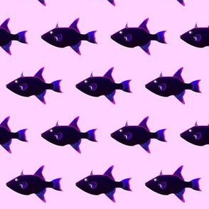 Ocean Triggerfish black on pink