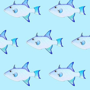 Ocean Triggerfish on blue