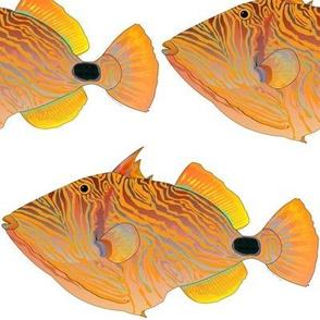 Orange-lined Undulate Triggerfish