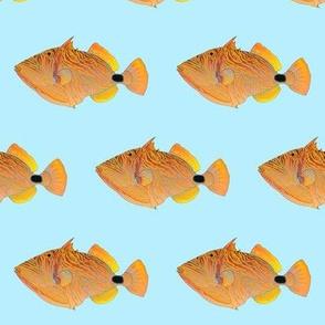 Orange-lined Undulate Triggerfish on light blue