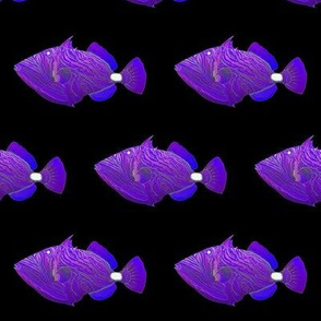 Orange-lined Triggerfish in purples
