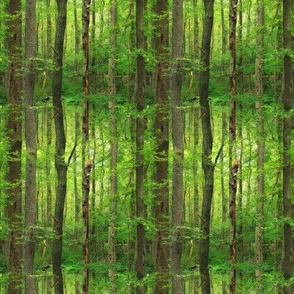 Forest For The Trees ~ Smaller