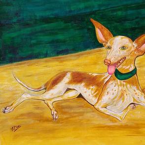 Spanish hound Podenco ibicenco