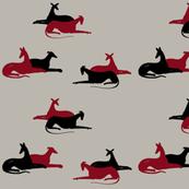 sighthound meeting 2