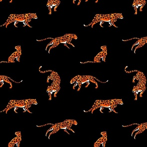Leopards. Wild cats