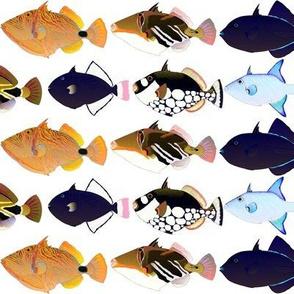 8 Triggerfish