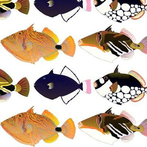 8 Triggerfish lg fm