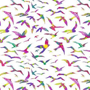 Colorful Migration