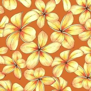Plumeria - ginger