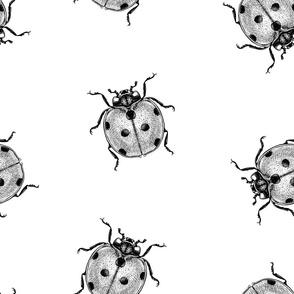 Engraving ladybug