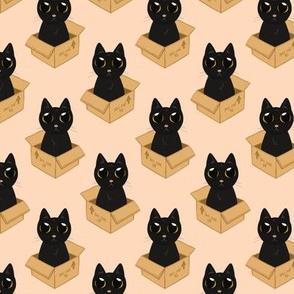 Cat in a box (small scale)