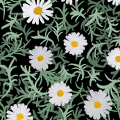 Daisies are the trend!