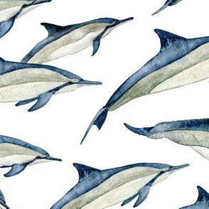 watercolor spinner dolphins (lg)