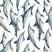 watercolor spinner dolphins (vertical)