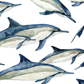 watercolor spinner dolphins