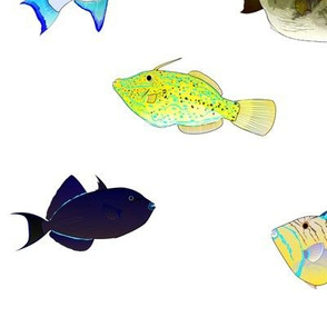 Atlantic Triggerfish Scatter