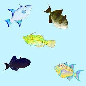 Atlantic Triggerfish Scatter on light blue
