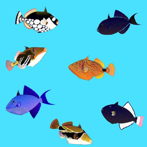 7 Indo-Pacifc Triggerfish Scatter on sea blue