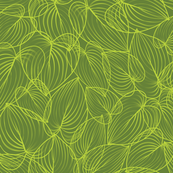 fresh green citrus leaf bunches
